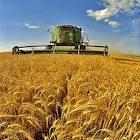 A produção agricola